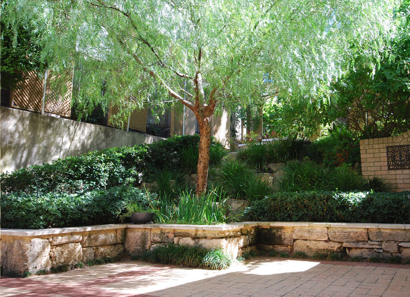 Ibis landscaping courtyard for Courtyard garden designs australia